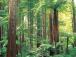 森林浴ツアー