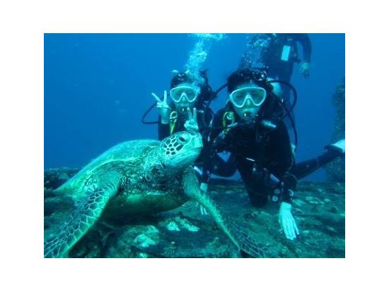 big turtle‼︎