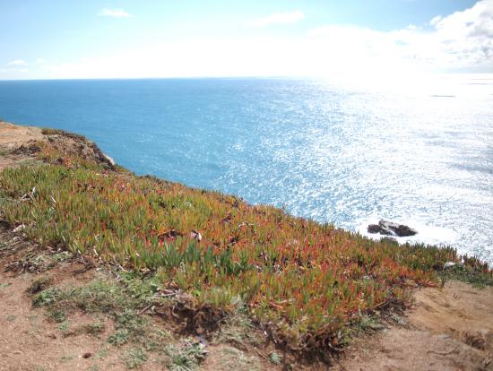 ロカ岬さいこうでした。