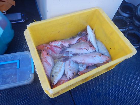 短時間でしたが7人がかりでこれだけ釣れました。いつもはもっと大きい魚も釣れるそうです…。