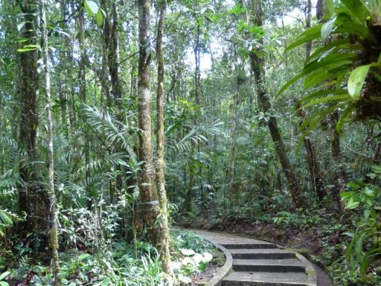 キナバル公園内山岳植物園