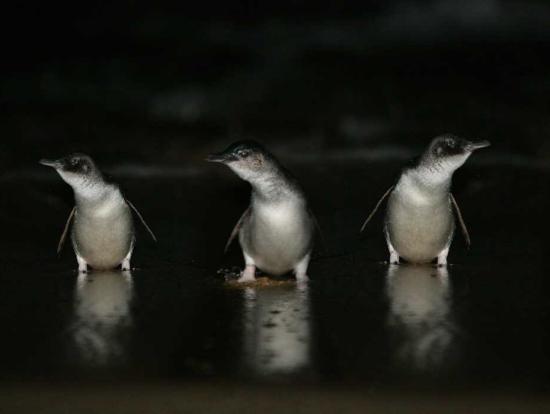 後からアプリでとったペンギン