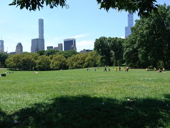 芝生からみるマンハッタンもまたよし
