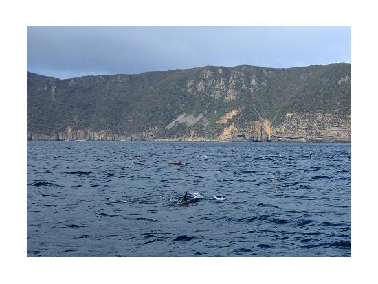 イルカの群れ。