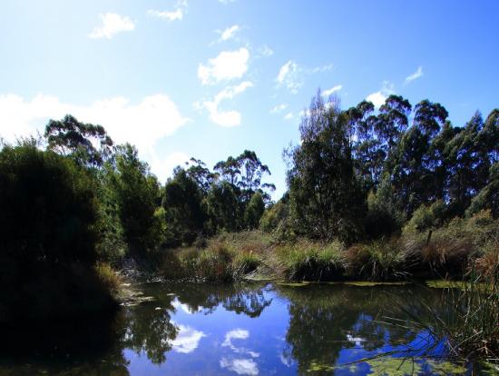 きれいなUnZooの沼。