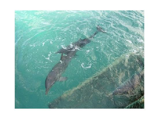 イスラ・ムヘーレス島に着くと、早速イルカを見ることができます。