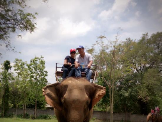 象使いが記念に撮影(象使いなのに、象から降りてる!)