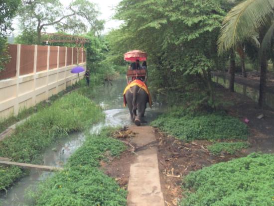 象乗り体験では水の中にも入ります。
