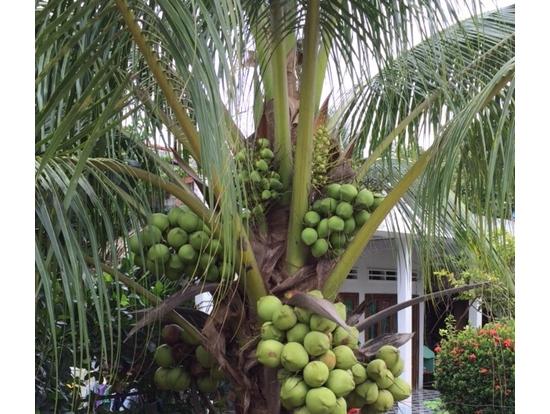 季節的にフルーツ最高