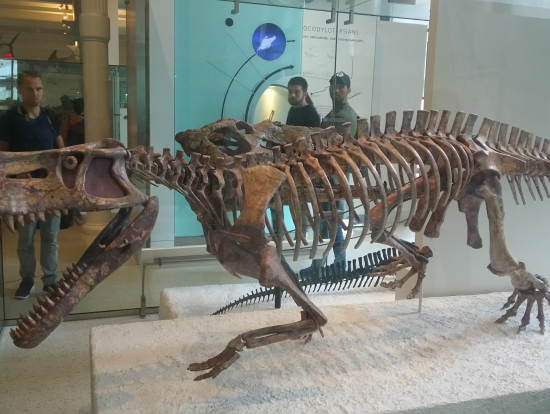 圧巻の恐竜化石の展示