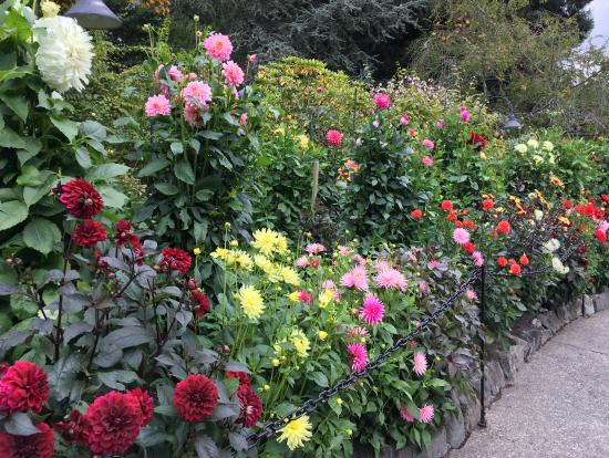 ローズガーデンのアーチは葉っぱですが脇道にはバラが咲き、甘い香りがします。