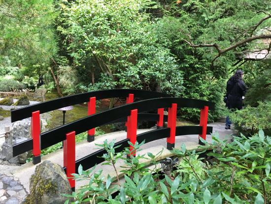 日本庭園の池には小銭が沢山 投げ入れられていました。