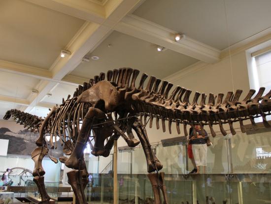 展示してあった恐竜の1つ