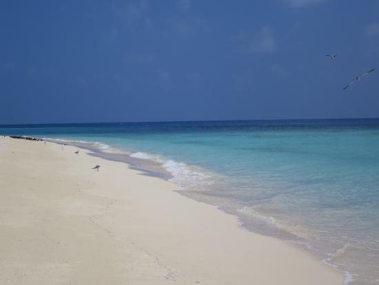 白い砂浜に透明度の高い海。最高。