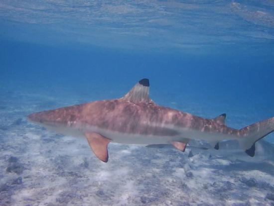 サメが目の前に