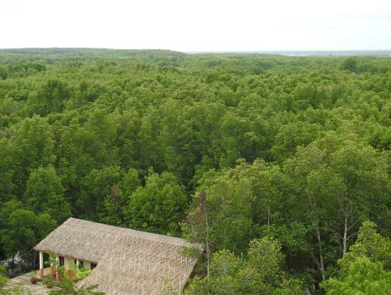 展望台から見たマングローブ林