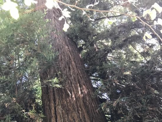 みごとな大木の中の森林浴