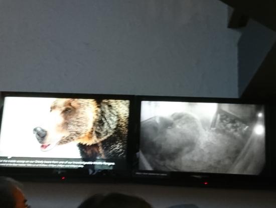 熊の写真と中継映像