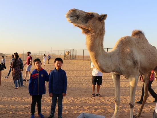 間近に見る駱駝
