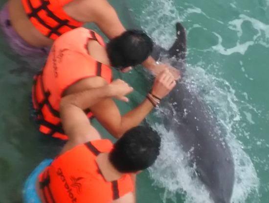 イルカが手の上を泳いでいきます。