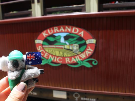 オーストラリア旅を一緒に過ごしたコアラちゃん