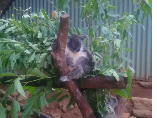 動物園内の動物はとても近くで見れます!