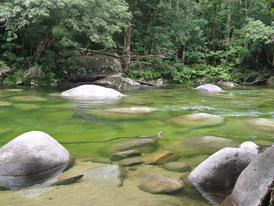 モスマン渓谷の川は増水してましたが泳いでいる欧米人の方もいました