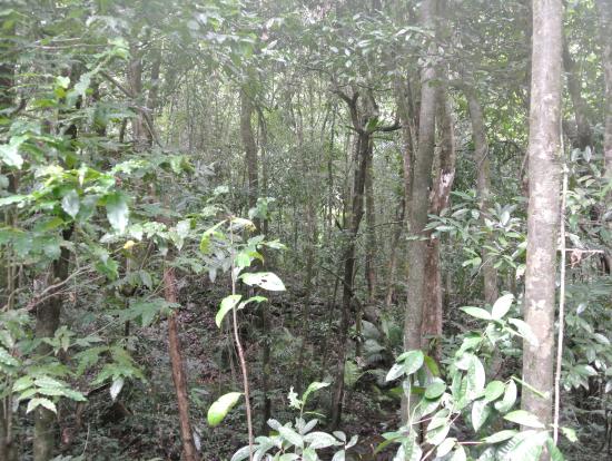 モスマン渓谷は緑豊かな熱帯雨林でした