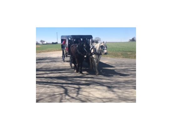 アーミッシュ村の馬車