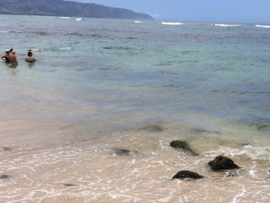 ラニアケアビーチ、ウミガメ