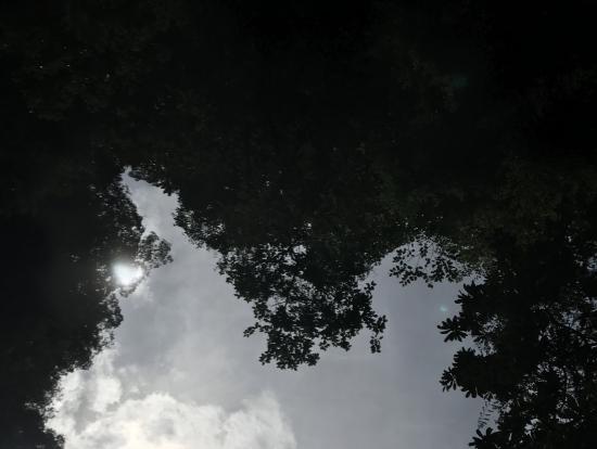 ハートの形をした木の葉