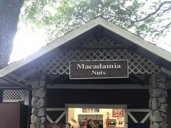 始めにマカダミアナッツファームへ
