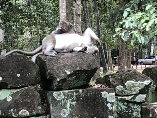 遺跡の上でいい感じに腕を曲げて寛ぐお猿さん