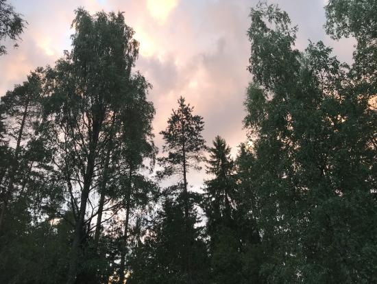 22時頃の森の空。