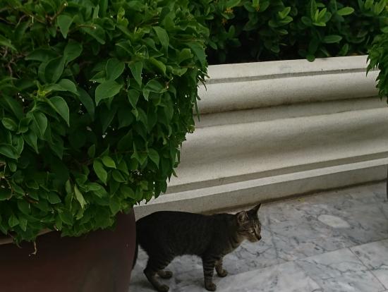 ワット・パクナムにいた猫