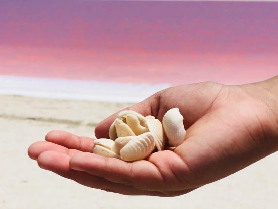 真っ白な砂には、いろんな形の貝が。