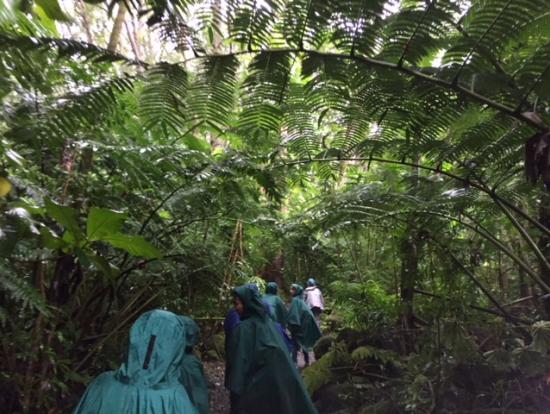 緑のジャングルを小人のように歩きます!