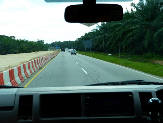 スランゴール川に行くまでの道。両脇に椰子の木あり