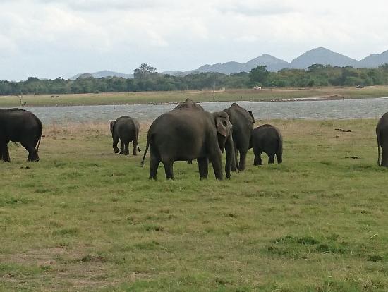 200頭以上の象の群れに出会えました。