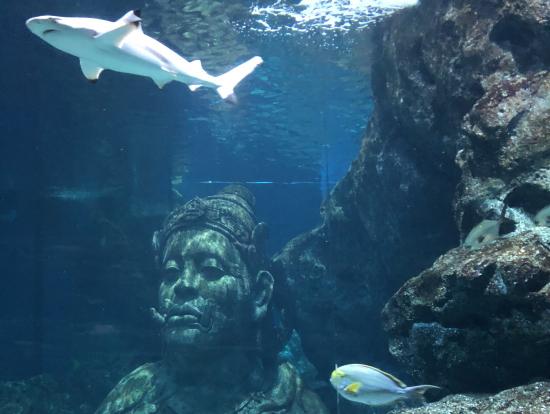 バンコク水族館。子供たちは大喜び。