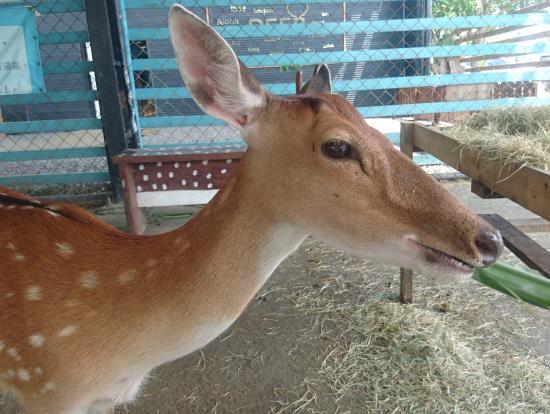 台湾最南端の墾丁観光の前に、鹿境、屏東縣の鹿境梅花鹿生態園 Paradise Of Deerで可愛いシカさん達と触れ合いました♥