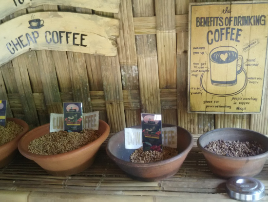 コーヒー園