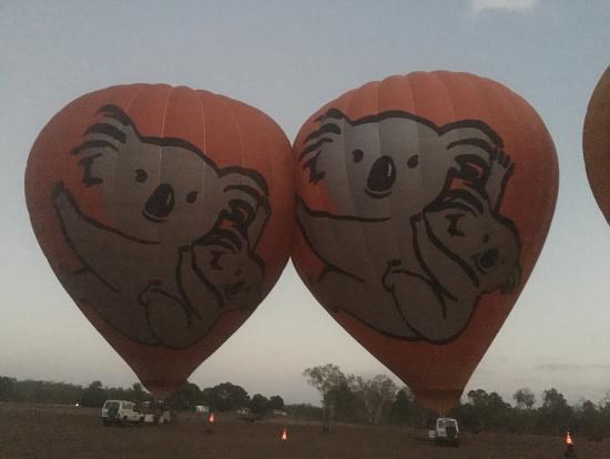 コアラの気球でした