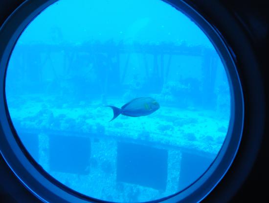 潜水艦を歓迎するさかな