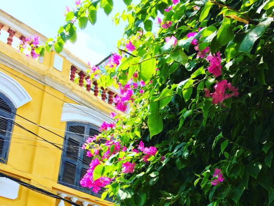 可愛い家と街中にたくさん咲いていた花。