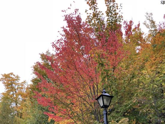 道端の紅葉