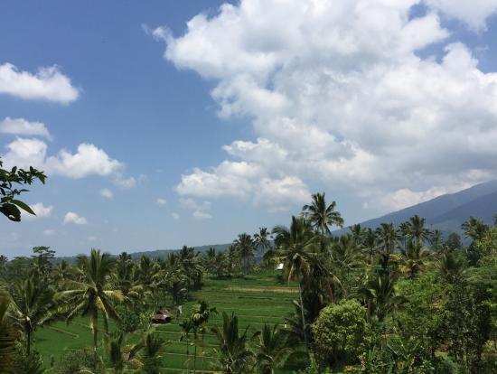 綺麗な田園風景と密林