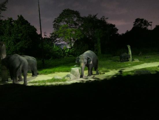 トラムから見た象