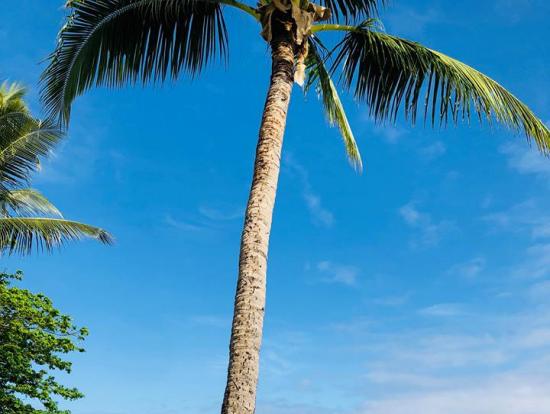 滞在先のデナラウ島内のホテル、ヒルトン