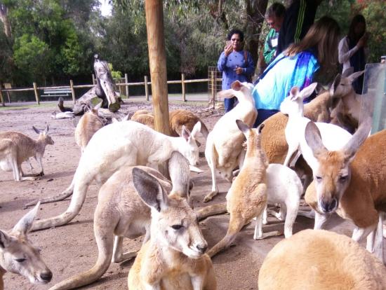 カバシャムワイルドライフパーク内はカンガルーをはじめ野生動植物がいっぱいです!